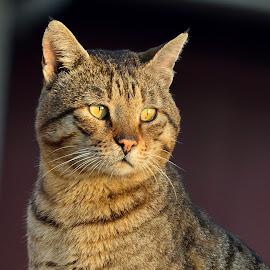 cat street by Mohamed Mahdy - Animals - Cats Portraits ( cats, cat, cormozy, nikon, animal )