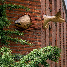 Just Another Fish in the Wall by Marie Browning - Artistic Objects Other Objects ( portland, brick, fish, architecture, city )