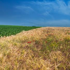 Field by Maja Tomic - Landscapes Prairies, Meadows & Fields ( wheat, field )