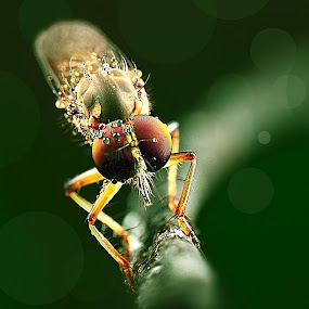 rf by Lanun Syah - Animals Insects & Spiders ( macro, art, insects, close up, animal )