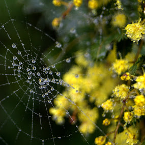 by Carleen Corrie - Nature Up Close Webs