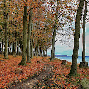 The trail by Ingrid Dendievel - Landscapes Forests ( nature, autumn, trees, forest, denmark, landscape )
