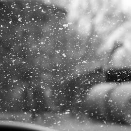 Snowing by Diane Ebert - Black & White Landscapes ( #candidsaremypassion, #snowinginiowa, #www.thecanddishutterbug.com )