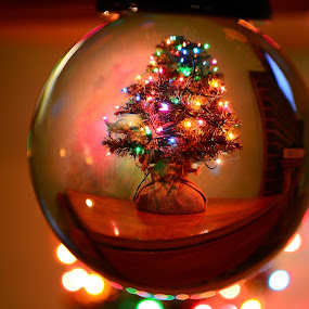 Tree in an Orb by Patricia Warren - Public Holidays Christmas ( holiday, lights, orb, tree, christmam,  )