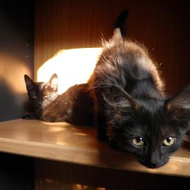 Curious cat by Ruxandra Proksch - Animals - Cats Playing ( kitten, cat, pet, kittens, cute, kitties, kitty, black, black cat, animal )