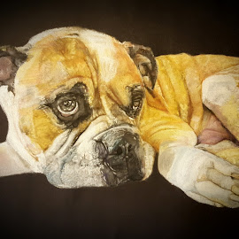 Dozer by Lyndsay Hepburn - Drawing All Drawing ( mastifpastelportrait, dogportrait, bigdogportrait, caninepastelportrait )