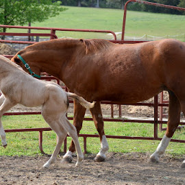 Jumping for joy by Missy Moss - Animals Horses