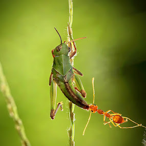Mangsa besar by Adhii Motorku - Animals Insects & Spiders
