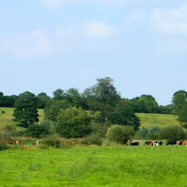 Beccles Marshes by Emma Thompson - Landscapes Prairies, Meadows & Fields ( field, green blue, landscape, cows,  )