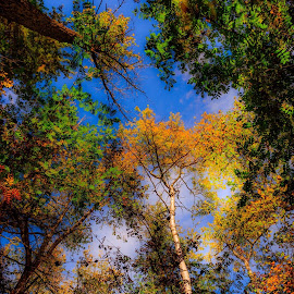 The Beautiful Blue Sky by Joseph Law - Nature Up Close Trees & Bushes
