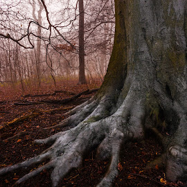 Roots by Malcolm Hare - Landscapes Forests ( treeroots, tree, roots, trees, forest )
