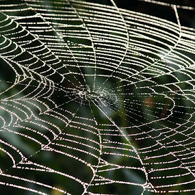Web Lines by Greg Van Dugteren - Nature Up Close Webs