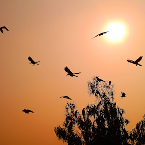 Journey Begins by Sautrik Dutta Mantrani - Instagram & Mobile Android ( sunrise, morning, birds )