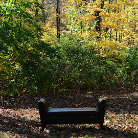 Have a seat by Beth Bowman - Nature Up Close Trees & Bushes