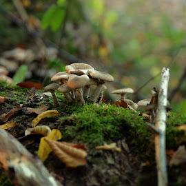 hang in there buddies by Abhinav Ganorkar - Nature Up Close Mushrooms & Fungi ( mushrooms, fungi, nature up close, autumn, jungle )