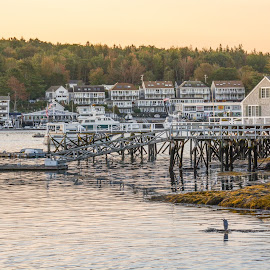 Boothbay Harbor by Robert Coffey - City,  Street & Park  Vistas ( water, harbor, boothbay, buildings, reflections, docks )
