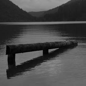 Blue Lake #1 by Karina Zawilinski - Black & White Landscapes ( reflection, wood, abstract, lake, trees )