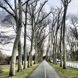 Follow the road by Asaf Hofman - Nature Up Close Trees & Bushes ( canon, hdr, trees, berlin, landscape, city )