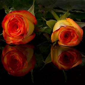 2 Roses by Cristobal Garciaferro Rubio - Nature Up Close Flowers - 2011-2013 ( rose, reflection, petals, roses, reflections, flowers, flower, petal )