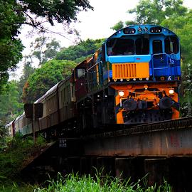 Kuranda Scenic Rail over Freshwater Creek by Peter Keast - Transportation Trains ( railway, railroad, train, tourism, transportation, bridge, scenic )