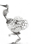 Ostrich Drawing James Mortimer
