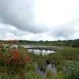Wildlife in fresh waters and wetlands