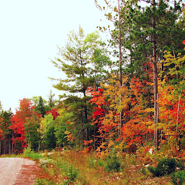 Bush Road in Autumn by Janet Herman - Nature Up Close Trees & Bushes ( bushes, autumn, fall, trees )