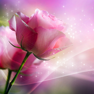 Pink Roses Live Wallpaper Online PC (Windows / MAC)
