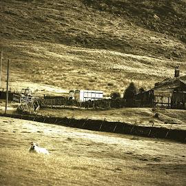 by Gordon Simpson - Landscapes Prairies, Meadows & Fields