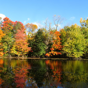 Fall by Erika  Kiley - Novices Only Landscapes ( water, reflection, fall, trees, pond )
