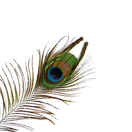 Peacock Feather by Christy Stanford - Abstract Patterns ( nature, blue, green, feather, peacock )