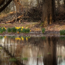 Secret Spot by Sandra Hilton Wagner - Nature Up Close Water ( water, reflections, trees, brown, forest, yellow, flowers, landscape, pond )