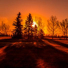 Millwood City Park by Joseph Law - City,  Street & Park  City Parks ( millwood, snow winter, bushes, trees, sunshine, edmonton, city park, shadows )
