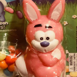Easter bunny toy by Marla Kaufman - Food & Drink Candy & Dessert