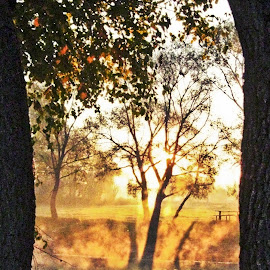 Mirror by Ирина Саунина - City,  Street & Park  City Parks ( парк, осень, отражение,  )