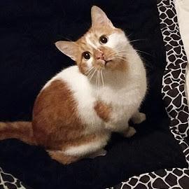 Play Time  by Janja R Sanja - Animals - Cats Kittens