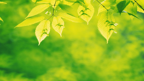 Tree leaves. Green wallpapers - screenshot