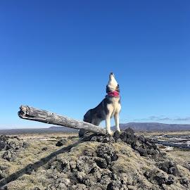 Ronja by Bjarklind Þór - Animals - Dogs Portraits ( #lavafield )