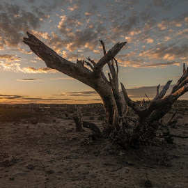 Deadwood by Ben Hodges - Landscapes Sunsets & Sunrises