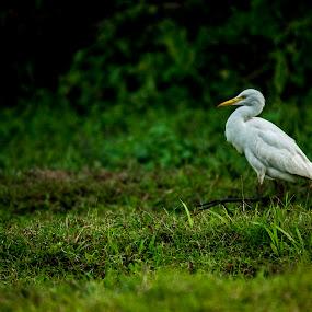 Shh.. Be Quiet.. ! by Gokul Rajenan - Animals Birds ( bird, nature, green )