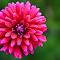 pintflower2018.jpg
