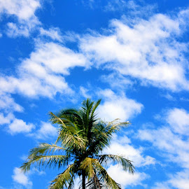 Zooming through the sky by Trisno Harlindo - Nature Up Close Trees & Bushes ( #nature, #sky, #photography )