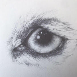 Animal Eye by Joy Woolf  Woodhall - Drawing All Drawing