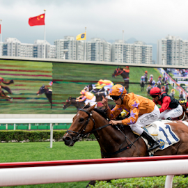 Winner by Andy Chow - Sports & Fitness Other Sports ( hong kong, horse race, jockey, racing, horse )