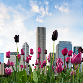 Concrete Garden by Vinod Kalathil - City,  Street & Park  City Parks ( skyline, illinois, citiscape, architecture, chicago, tulips, spring, united states )