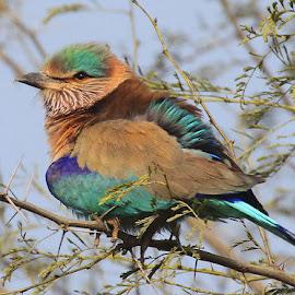 G8 by Abdul Rehman - Animals Birds (  )