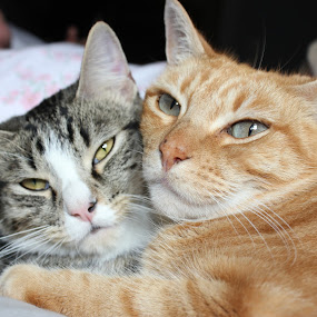 Best of Friends by Andy Marquez - Animals - Cats Portraits ( best of friends )