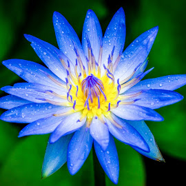 Blooming by Mark Alive - Flowers Single Flower