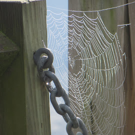by Moe Cusick - Nature Up Close Webs ( webs, spiders, chain, morning, river )