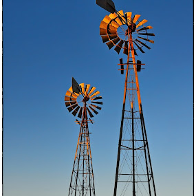 Two grand old dames still standing tall. by Glenn Visser - Artistic Objects Industrial Objects ( karoo, farm, south africa, windpumps )